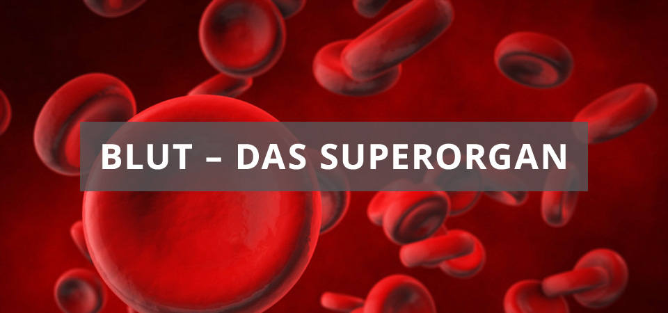Blut – das Superorgan – Fehlerseite – Medeno Medical Check-Up – Bremen